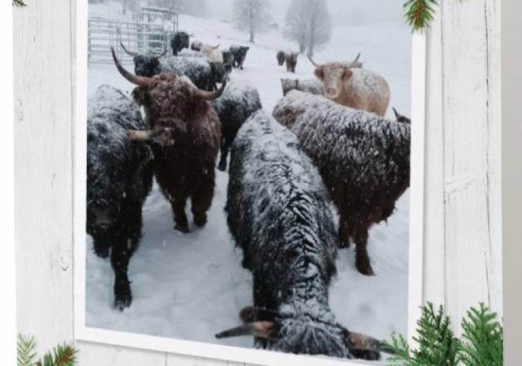 Ge bort en köttlåda i jul!