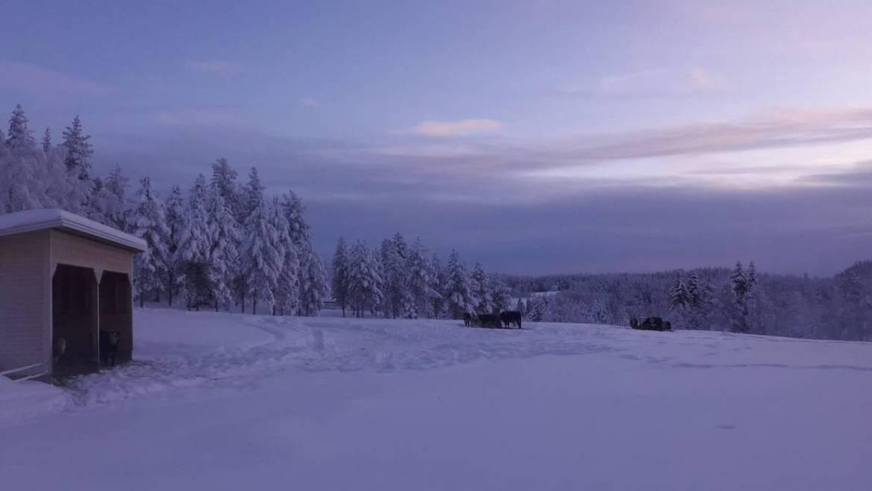 Köttleverans! 28/2 -18 Klovsta-E4an-Stockholm-Södertälje